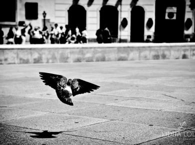 vienna-street-photography-13