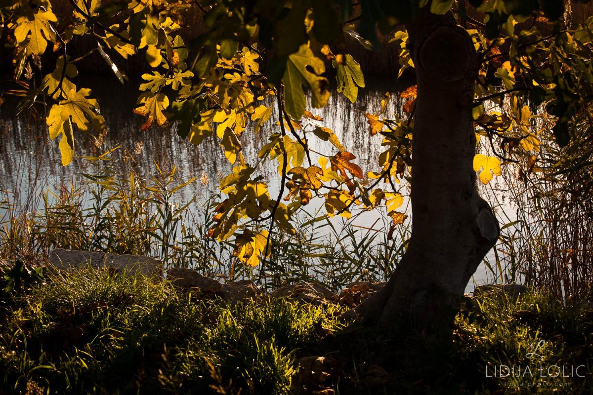 Žuto lišće