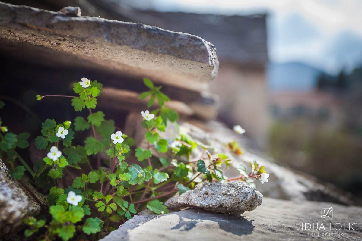 Dol-brac-flowers