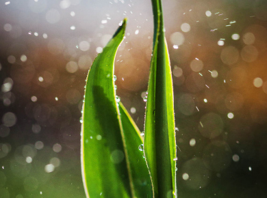 flowers-and-plants-with-water-drops-02