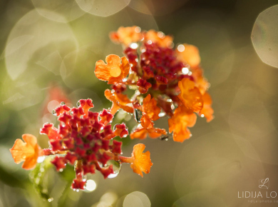 flowers-and-plants-with-water-drops-07
