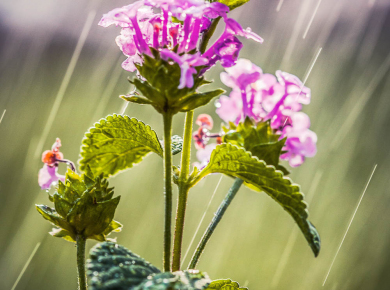 flowers-and-plants-with-water-drops-10