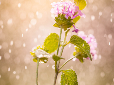 flowers-and-plants-with-water-drops-11