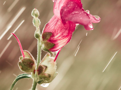 flowers-and-plants-with-water-drops-12