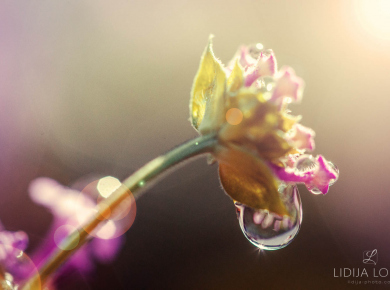 flowers-and-plants-with-water-drops-15