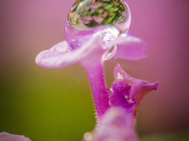 flowers-and-plants-with-water-drops-16