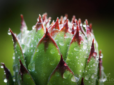 flowers-and-plants-with-water-drops-18