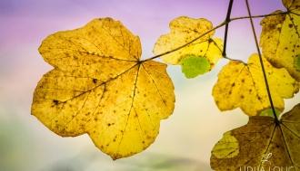 fotografije-biljaka-lisce-020
