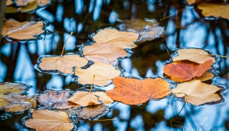 fotografije-biljaka-lisce-021