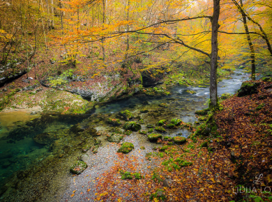jesen-kamacnik-gorski-kotar-01