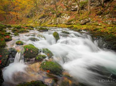 jesen-kamacnik-gorski-kotar-03