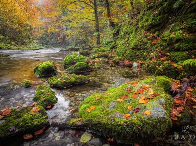 jesen-kamacnik-gorski-kotar-06
