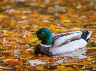 jesen-plitvicka-jezera-05