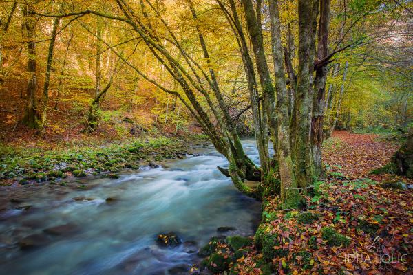 jesen-zeleni-vir-gorski-kotar-01