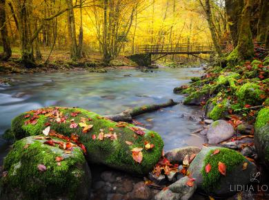 jesen-zeleni-vir-gorski-kotar-02