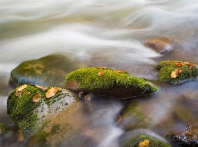 jesen-zeleni-vir-gorski-kotar-03