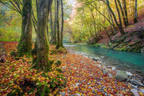 jesen-zeleni-vir-gorski-kotar-04